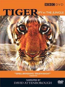 Tiger Spy In The Jungle